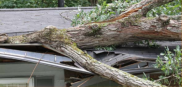 Photo of fallen branch on roof
